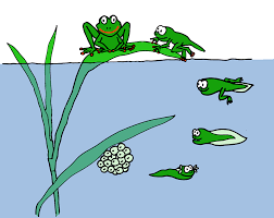 clipart of life cycle of frog